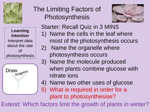 The Limiting Factors of Photosynthesis Outstanding Lesson AQA New 9-1 Bioenergetics