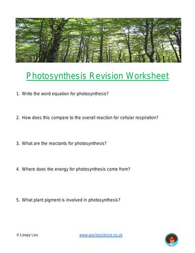 Photosynthesis revison worksheet