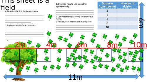 Sampling using Quadrats