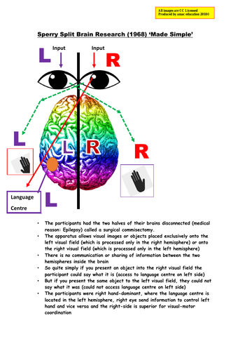 """Psychology Sperry (1968) 'Split Brain' Research: """"Made Simple"""""""