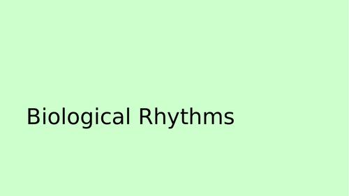 Biopsychology - Ultradian and Infradian Rhythms