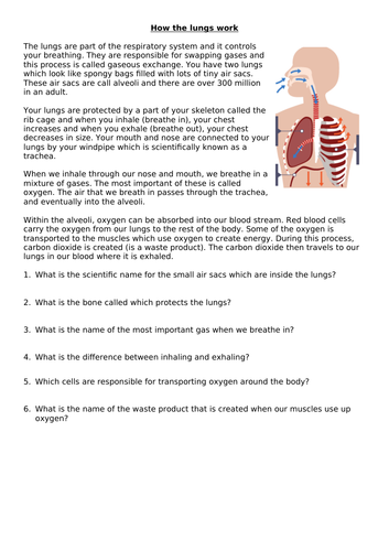 The respiratory system - how the lungs work - Y5 & Y6