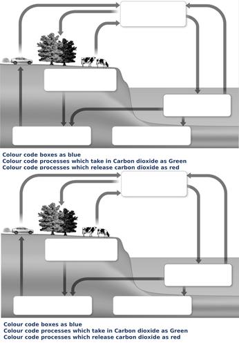 AQA Carbon Cycle