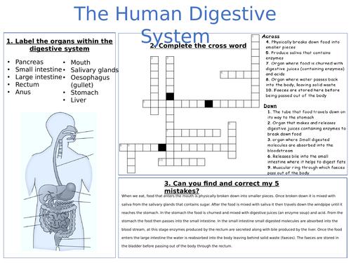 A3 digestion worksheet