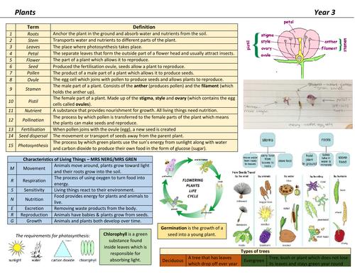 Plants Knowledge Organiser