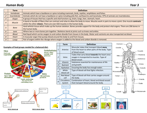 Human Body Knowledge Organiser