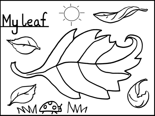 Leaves Colouring Sheet