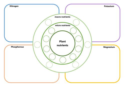 Plant nutrition worksheet