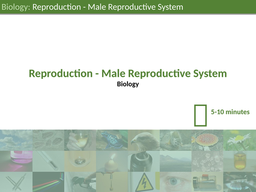 KS3 Science - Male Reproductive System