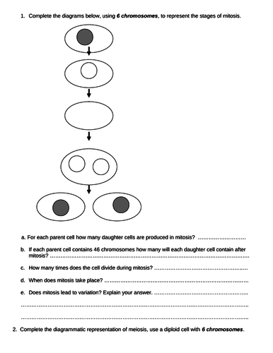 GCSE Biology - Mitosis and Meiosis