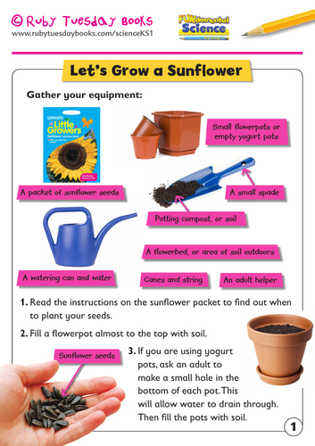 KS1 Science: Plants - Let's grow a sunflower!