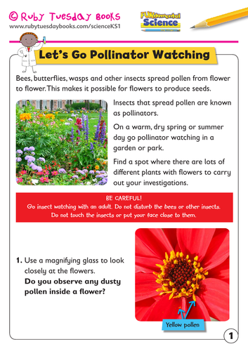 Ks1 Science Plants Let S Go Pollinator Watching By