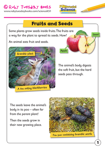 KS1 Science: Plants -Fruits and seeds