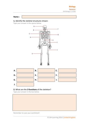 KS3 Science - The Skeleton Interactive PDF