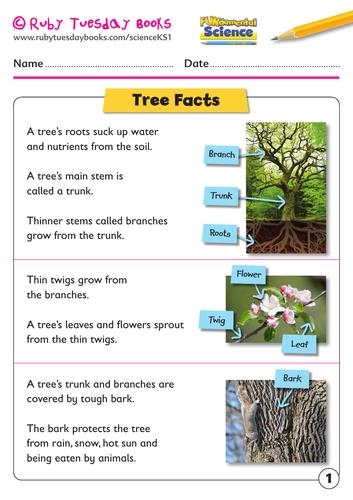 KS1 Science: Plants - tree facts