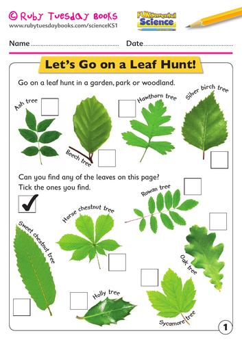 KS1 Science: Plants - let's go on a leaf hunt!