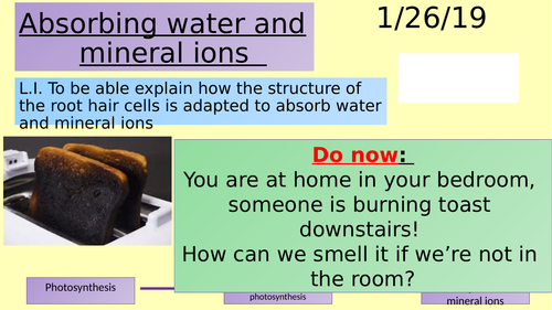 Absorbing water and mineral ions