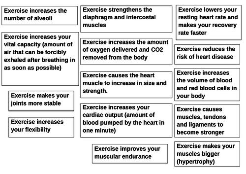Long term effects of exercise: GCSE PE Edexcel