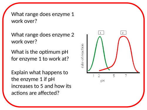 Enzyme Function Differentiated Activity