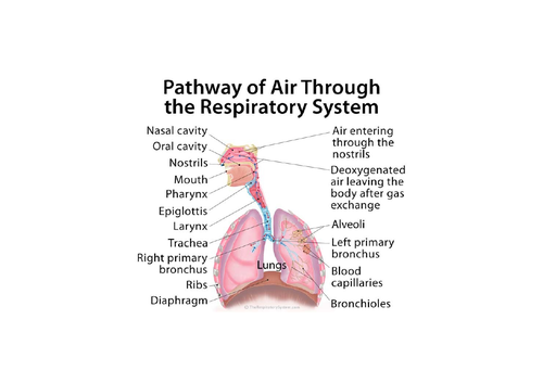 LO2: Respiratory System, Malfunctions and Impacts on Individuals