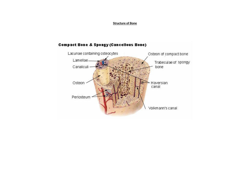 LO4: Musculoskeletal System, Malfunctions and Impacts on Individuals
