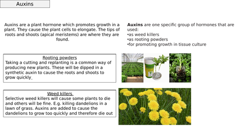AQA GCSE Plant Hormones and their uses