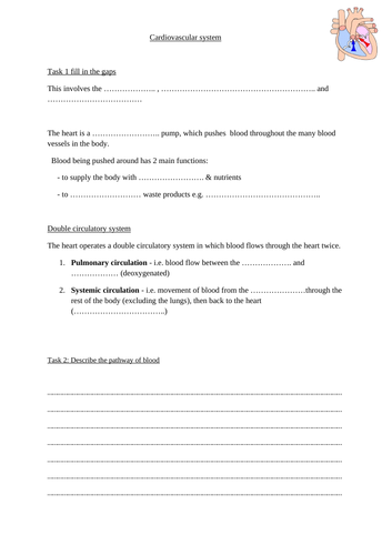 Cardiovascular system activity OCR GCSE PE