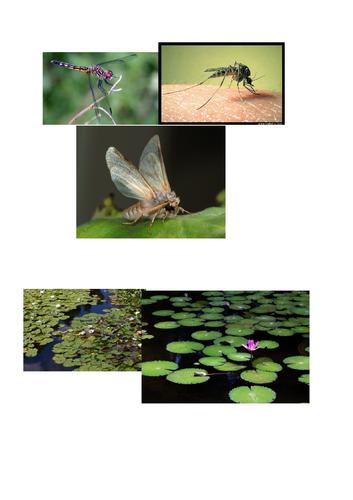 plan your own habitat! KS1 science. habitats/needs of animals