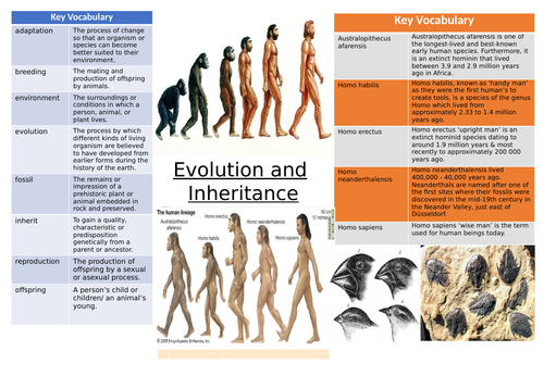 Evolution and inheritance Knowledge Organiser