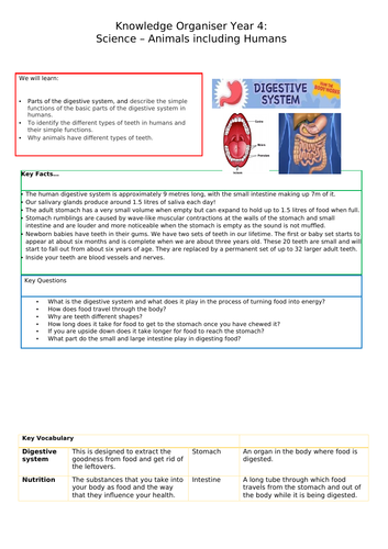 Digestion Knowledge Organiser Year 4