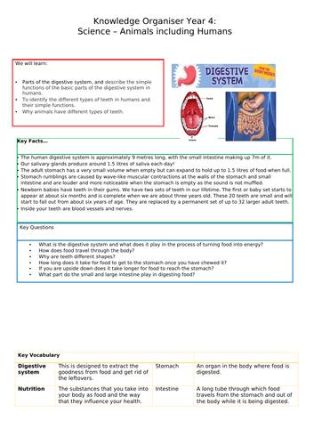 Digestion Knowledge Organiser Year 4