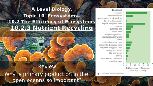 Nutrient Recycling (Carbon & Nitrogen Cycles)