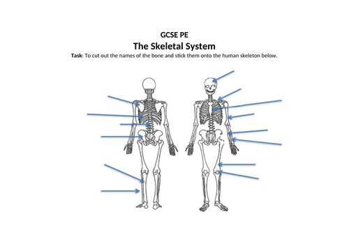GCSE PE/Dance Skeletal System Activity Sheet