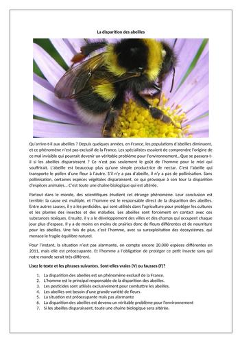 La disparition des abeilles / The disappearance of bees / Environment