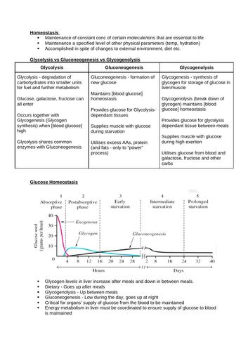 Glycogen Metabolism & Homeostasis