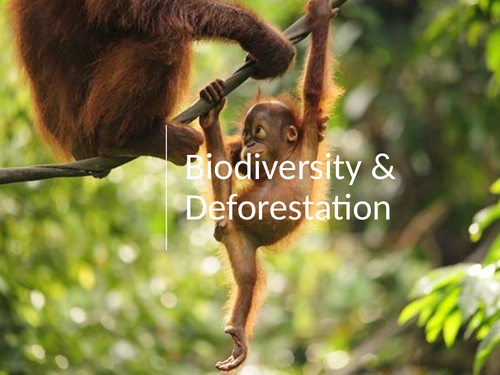 Biodiversity & Deforestation