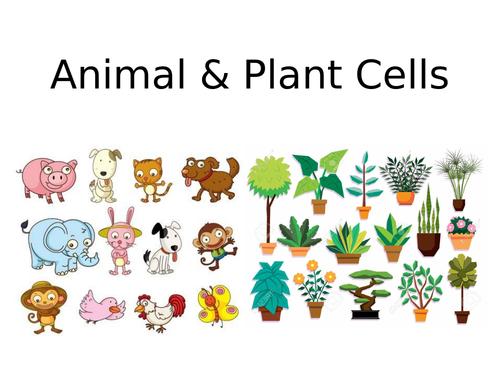 9-1 AQA GCSE Biology - U1 L1 Animal & Plant Cells and Orders of Magnitude
