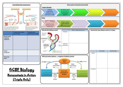 AQA GCSE Biology (9-1) - Paper 2 Revision Mats - Triple Sciences (Biology Only)