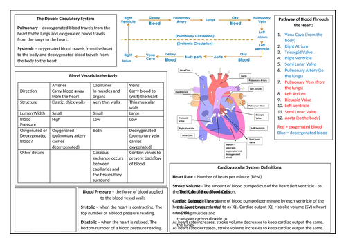 OCR GCSE PE Cardiovascular and Respiratory Systems Revision Sheet