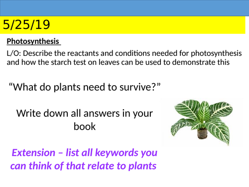 KS3 Photosynthesis and Gas Exchange