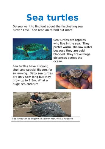 Reading comprehension - SEA TURTLES!