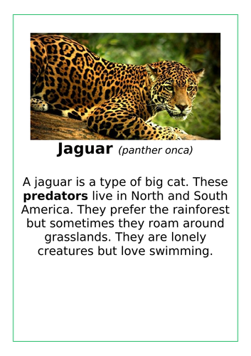 ANIMAL INFORMATION CARDS