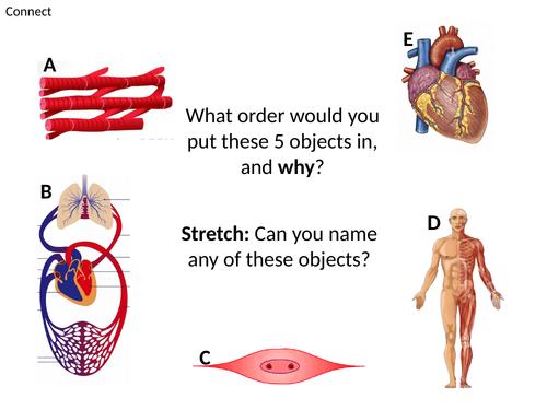 Levels of organisation. Activate 1 Cells, Tissues, Organs KS3 SEN ELC