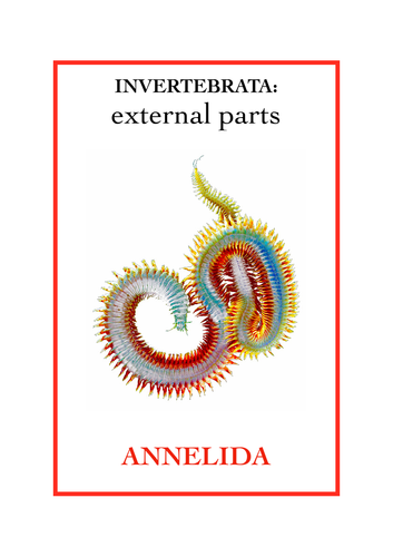 Invertebrata: External parts book 5 - Annelida