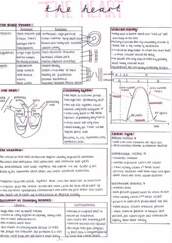 IB and A Level Biology Revision Posters