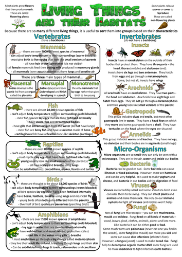 Year 6 Science Poster - Living things and their habitats