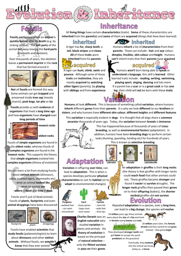 Year 6 Science Poster - Evolution and inheritance