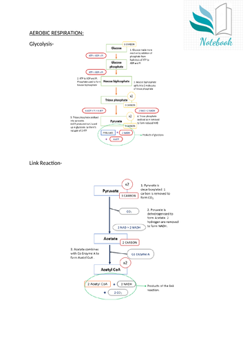 AQA A Level Biology - Aerobic Respiration cycles