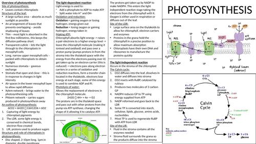Photosynthesis crib sheet
