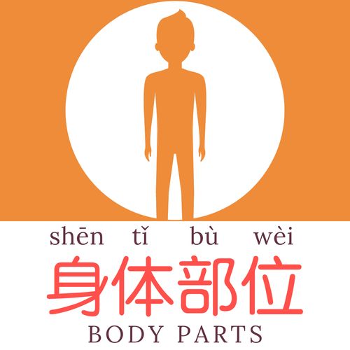 Body Parts (Mandarin Chinese) Flashcards & Word Mat - 身体部位